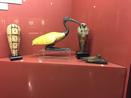 Rosicrucian Egyptian Museum: The famed Ibis...