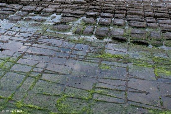 Eaglehawk Neck, Australia: Tessellated Pavement