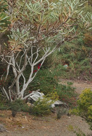 Australia Meridionale, Australia: stokes bay bush garden - rosella