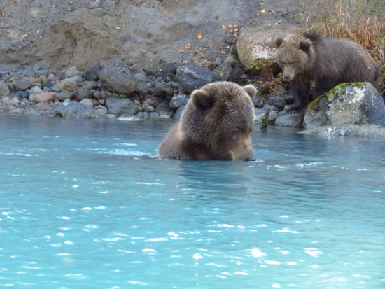 Nikiski, AK: Momma bear and baby bear