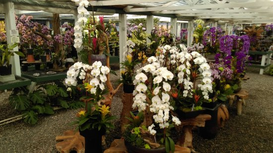 Encinitas, CA: A wonderland for an orchid lover!