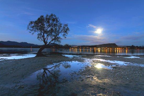 Wanaka, New Zealand: LONELY TREE
