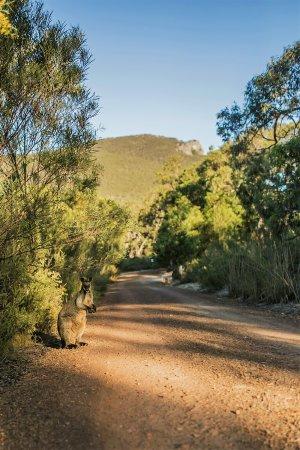 Dunkeld, Australia: Driveway to the lodges