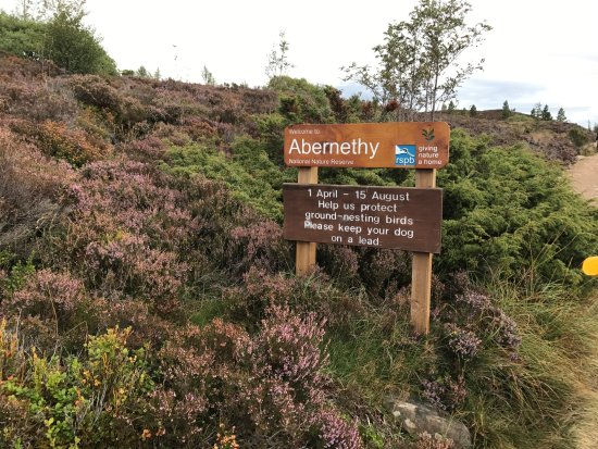 Aviemore, UK: Protected areas.