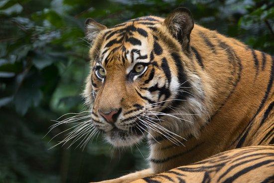 Colwyn Bay, UK: Tiger...
