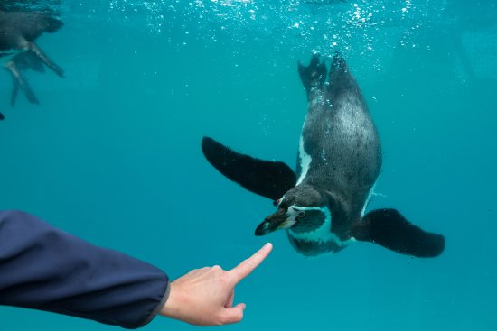 Colwyn Bay, UK: Penguin...