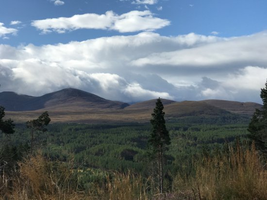 ‪‪Aviemore and the Cairngorms‬, UK: Plenty of forest.‬