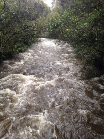 Ohakune, Selandia Baru: Water near the walk