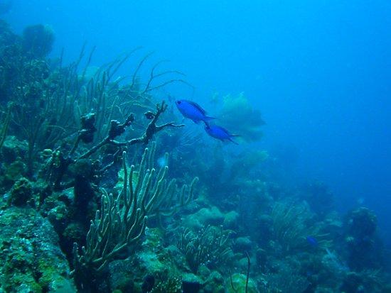 Sea Ventures Dive Centers