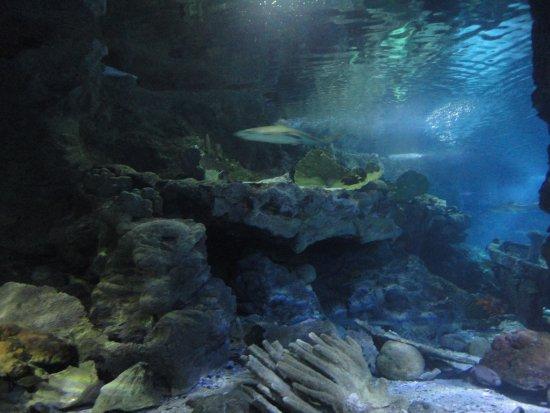アンダーウォーター ワールド, 水族館