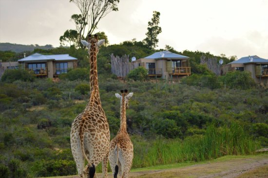 Garden Route Game Lodge: Game drive