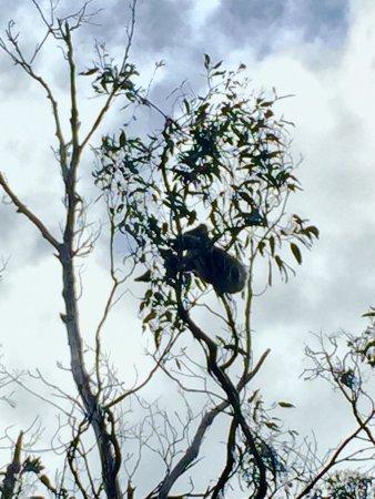 Hordern Vale, Australia: photo1.jpg