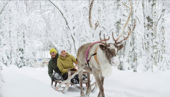 Saariselka, Finlandia: Seated comfortably with a friend in a reindeer guided sleigh, you are taken on a ride in style.