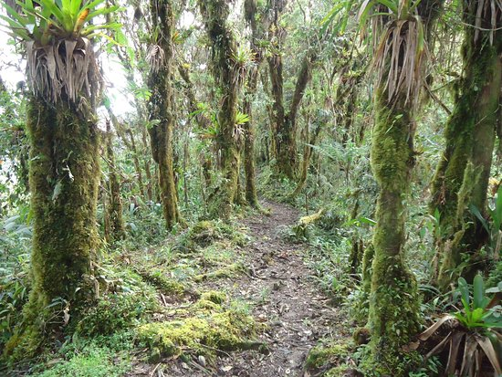Yunguilla, الإكوادور: clud forest
