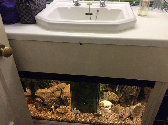 Evesham Hotel: Under sink fish tank