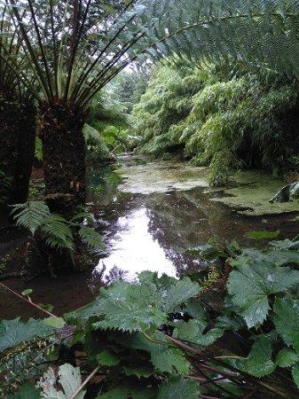 St Austell, UK: wie im Dschungel