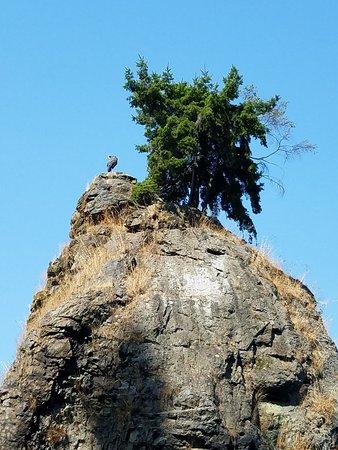 Stanley Park: Siwash Rock