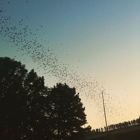 Capital Cruises: The beautiful bats!