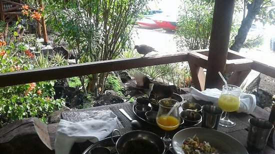 Ile Aux Cerfs: Bird on the table next to us-already swooping in on the abandoned food