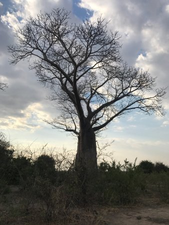 Liwonde National Park, Malawi: photo8.jpg