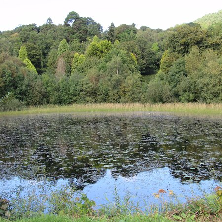 Castlewellan, UK: Cypress Pond