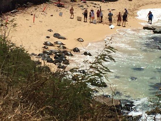 Paia, Hawái: photo1.jpg