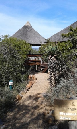 Zdjęcie Amakhala Game Reserve
