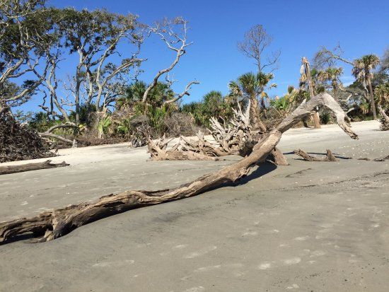 Driftwood Beach: Yet another view of this incredible beach area.