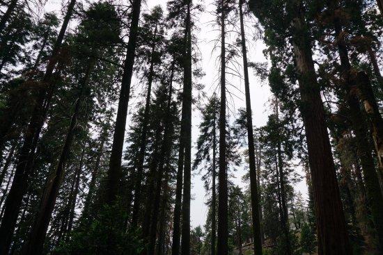 Dinuba, Californië: Sequoia Park
