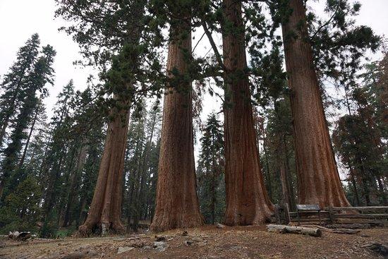 Best Western Americana: Sequoia Park