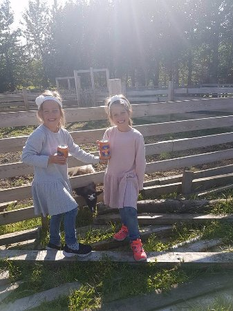 Mosfellsbaer, Iceland: My twins at the farm Hradastadir, very happy with their visit