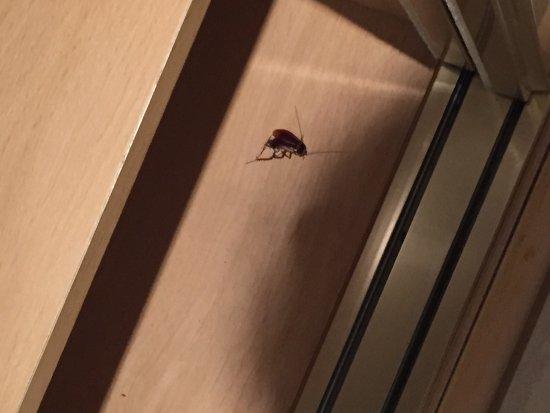 梅里亞麻雀酒店照片