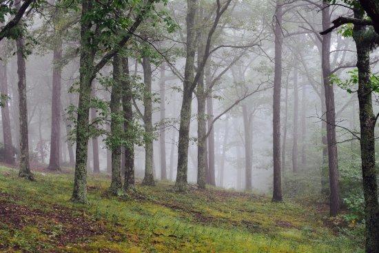 Roanoke, VA: Foggy at Mill Mountain