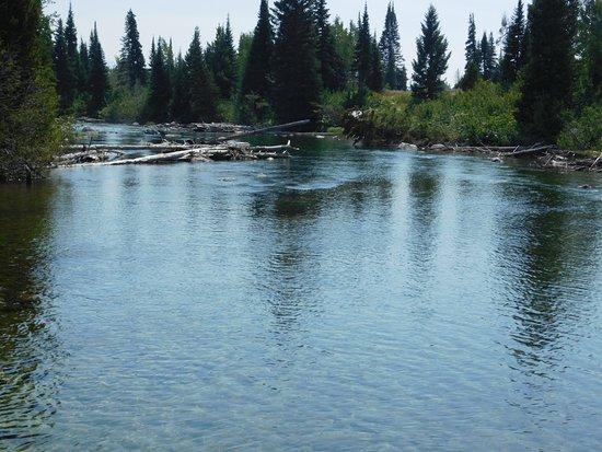 Jenny Lake : Cottonwood Creek