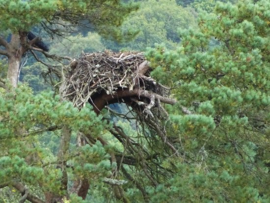 Dunkeld, UK: The empty Osprey nest!