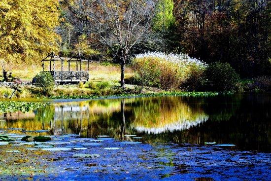 Meadowlark Botanical Garden: Meadowlark - Near the Lake