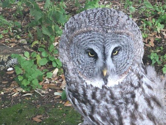Birchington, UK: Look at that face!