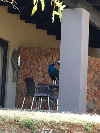 Thaba Eco Hotel: photo5.jpg