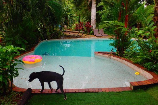 Monkey Lodge Panama: piscine