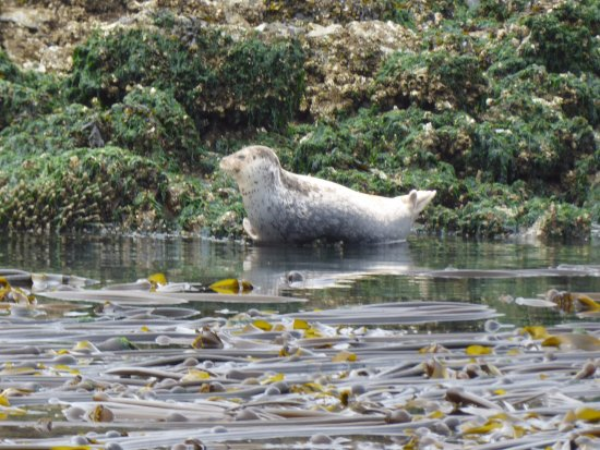 Oak Harbor, WA: Seal spotting
