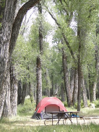 Kelly, WY: Sites are along the Gros Ventre River and are open or lightly wooded.