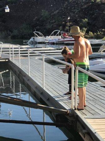 Havasu Springs Resort: Feeding the fish off the dock- dock in great shape!