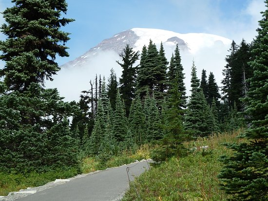 Mount Rainier: Mt Rainier on the Skyline trail