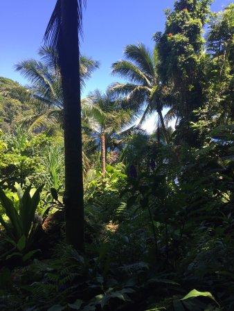 Papaikou, Havaí: photo9.jpg