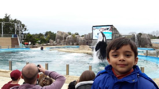 Mundo Marino: Espectáculo de delfines y orca. Mi nieto y nosotros,lo disfrutamos mucho