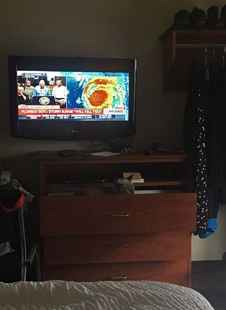 WoodSpring Suites Gainesville I-75 : Kitty in a drawer during hurricane evacuation.