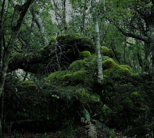 Stewart Island, Nueva Zelanda: Stunning ferns, and moss.