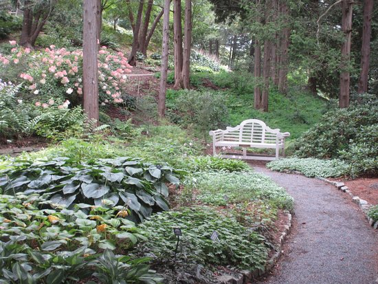 Beautiful wooded garden - Picture of Cornell Botanic Gardens, Ithaca ...