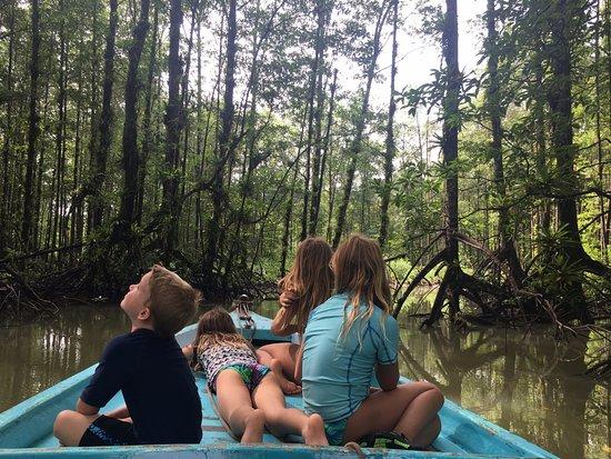 Golfito, Κόστα Ρίκα: Mangrove canals