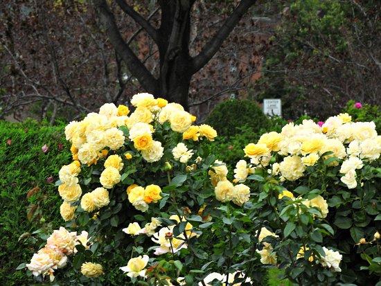 Leif Erickson Park Rose Garden Duluth 2020 All You Need To